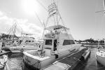 Black White harbor