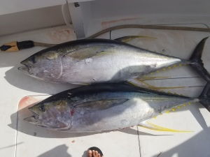only our 4 th fishing trip on Ho'okipa